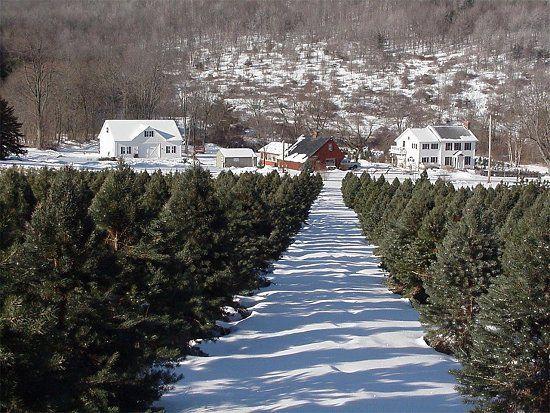 Best 25+ Christmas tree farms ideas on Pinterest | Christmas tree ...