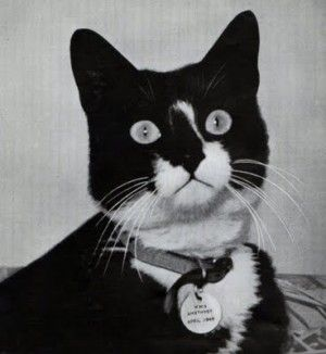 Meet Unsinkable Sam: The Cat that Survived Three Ships Sinking in WWII