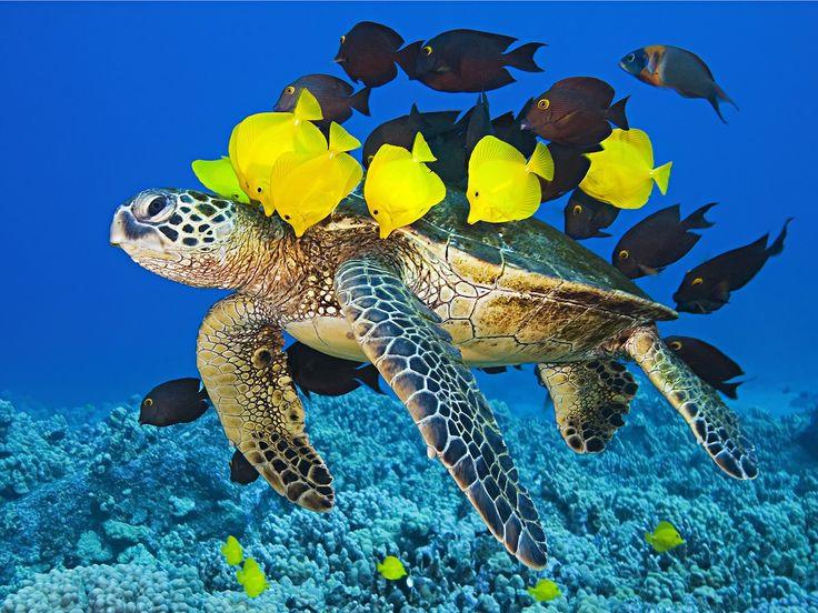 A 25 legjobb ötlet a Pinteresten a következővel kapcsolatban - marine biologist job description