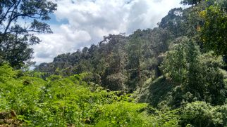 Park Narodowy Nyungwe