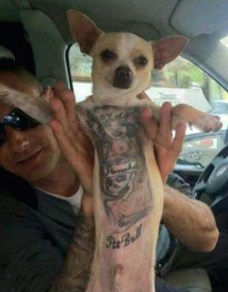 Tattooing pets in the United States should be outlawed! | YouSignAnimals.org
