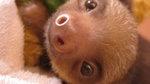 Meet the sloths on Vimeo