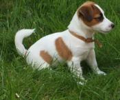 Why can we shoot a dog and nobody reacts? Confirmation needed Pourquoi peut on tirer sur une chienne sans que personne ne réagisse?