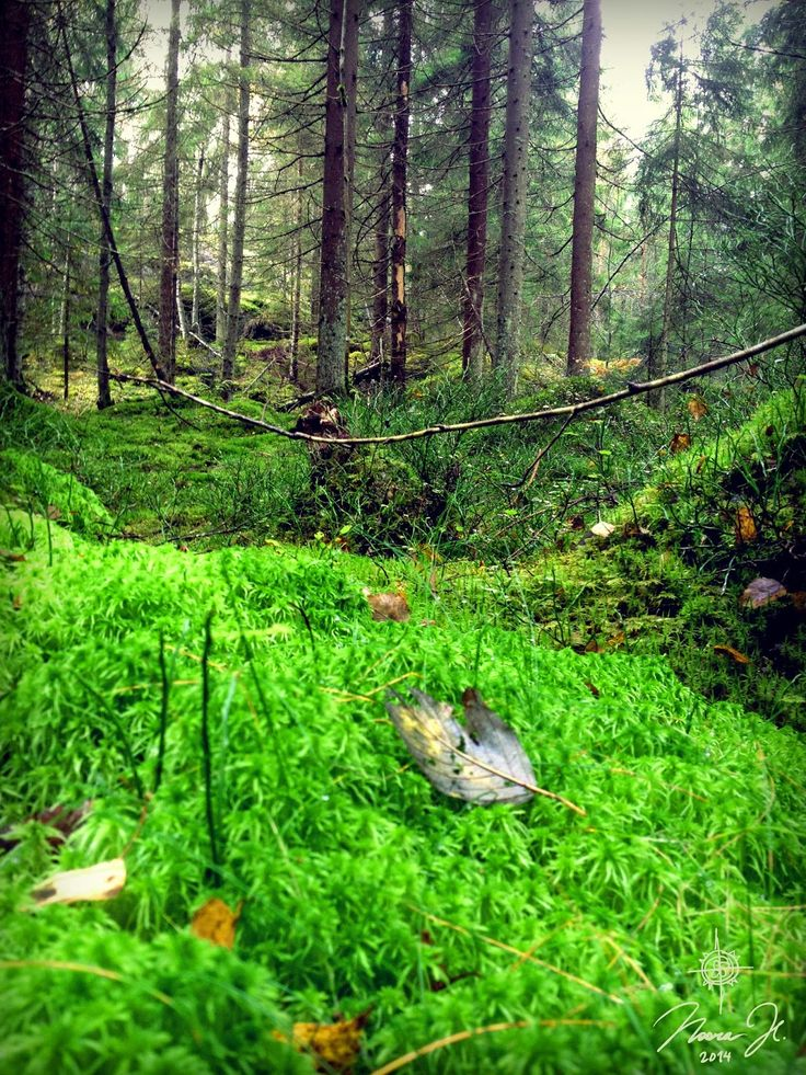 Spaghnum moss is so beautiful