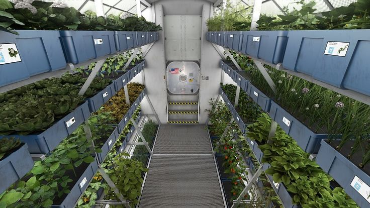 Plants and fish are grown in torus-shaped tubes, consisting of 50% water, 50% air. Designed with sealable openings at the bottom, top and center, allowing aeration no matter the position of spacecraft. Combines the principles of humanure farming with vertical gardening and aquaponics to allow food production. The purpose of this is to supplement our stored food. Duckweed, rinsed with iodine solution.