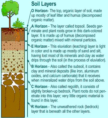 Soil Layers - Soil is made up of distinct layers called horizons.