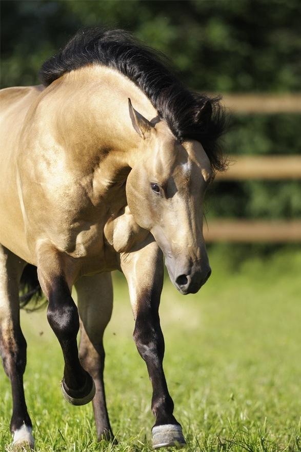 dream horse! so beautiful.