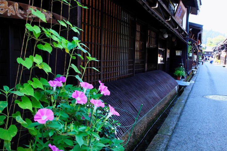 城下町の中心、商人町として発展した高山の上町、下町の町並み。周辺は出格子のある昔ながらの家が軒を連ねている。造り酒屋や老舗ののれんをながめながら食べ歩きができる。人力車も利用可能で、日本の伝統文化を堪能できる街だ。