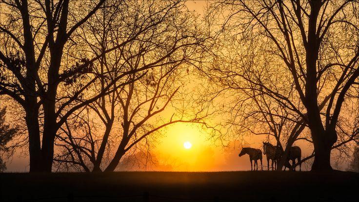 https://flic.kr/p/EXJcho   Foggy Sunrise    Hawkesbury River /  Windsor /   NSW