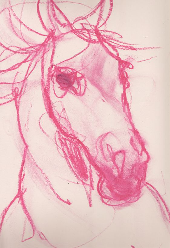 Gesture drawing of horse by Amelie Hegardt via Besottedblog.com