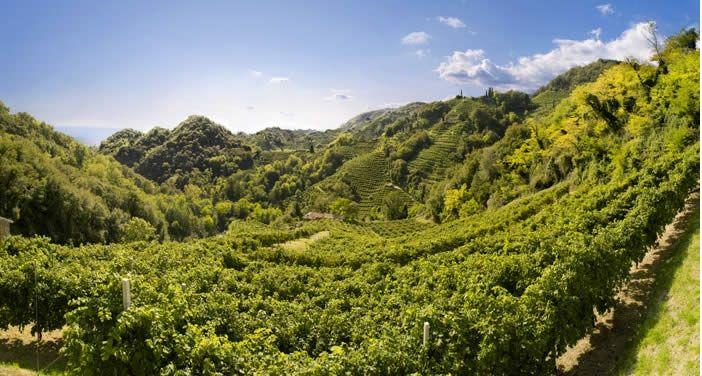 Vista sulle colline del Conegliano Valdobbiadene Prosecco Superiore DOCG