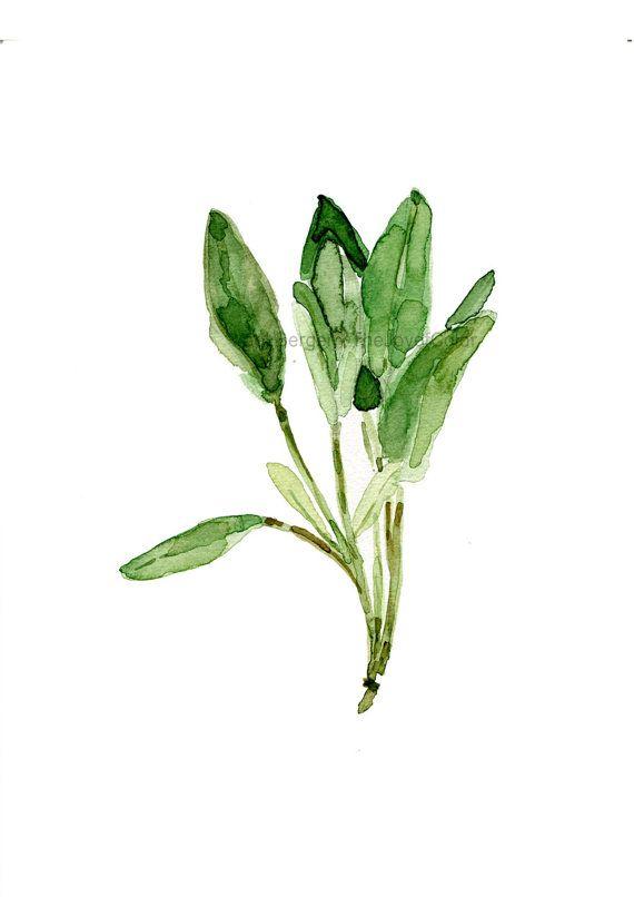 Hojas de salvia acuarela grabado, sage arte grabado, hierba de la impresión, arte botánico, decoración cocina, arte minimalista, verde salvia, thejoyofcolor