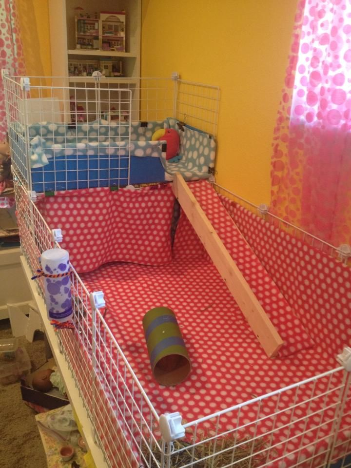 1000+ images about C&C cage ideas on Pinterest | Cavy ...
