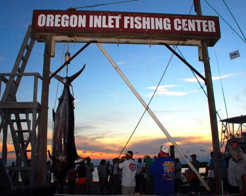 47 best outer banks fishing images on pinterest fishing for Oregon inlet fishing charters
