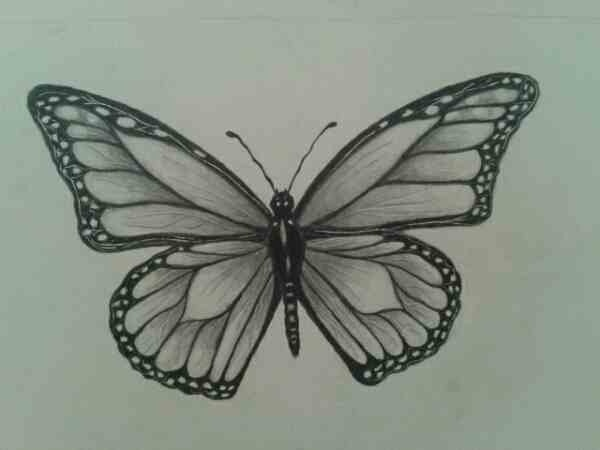 butterfly sketch possible pyrography sketches