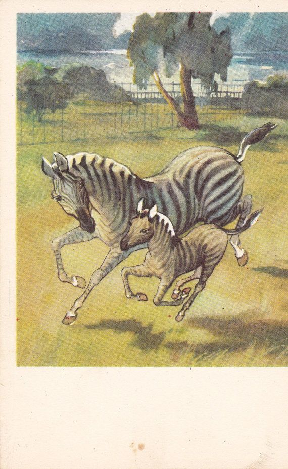 "Postcard Drawing by Stroganova and Alexeev ""Gallop. Zebras family"" - 1969. Fine Arts Publ., Moscow"