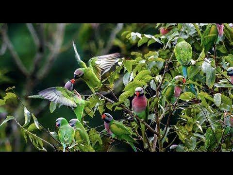 Bámulatos papagáj-invázió Kínában   Közel és távol http://kozelestavol.cafeblog.hu/2017/11/06/bamulatos-papagaj-invazio-kinaban/