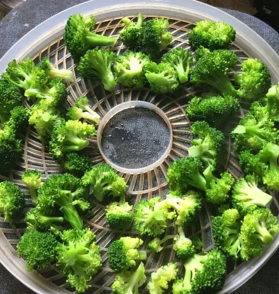 Dehydrating broccoli for long term storage.