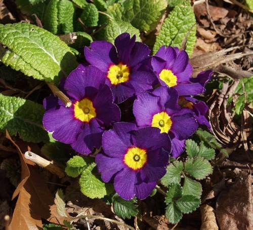 - cura dei fiori, delle piante d'appartamento e delle piante da esterno