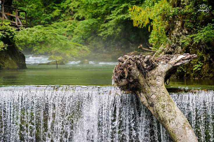 travel photography bled slovenje slovenia lake pond tree broken waterfall vízesés hobby