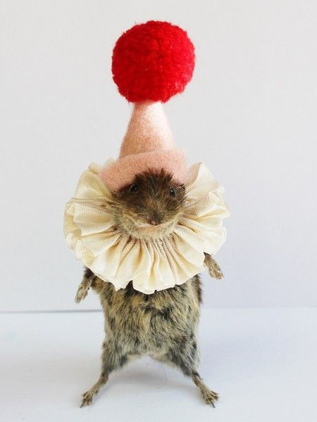 Dressed Taxidermy | Taxidermy Little Clown Mouse