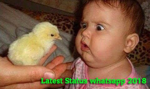 Funny WhatsApp Status : Laugh with your friends by sharing some Funny Status over WhatsApp or Facebook and other platforms. Try 2018 Best whatsapp status app  #NewYearStatus #LoveStatus #RomanticStatus #SadStatus #FriendsStatus