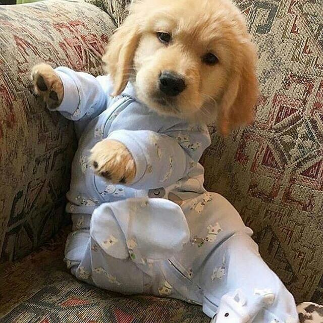 Puppy In Pj S Puppies In Pajamas