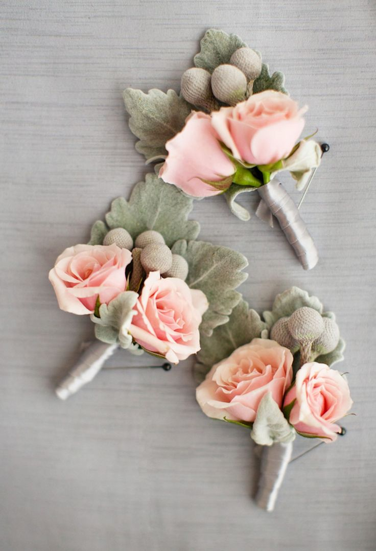 Dusty miller, blush roses and brunia wedding boutonnieres for groom and groomsmen.  Magnolia Photography