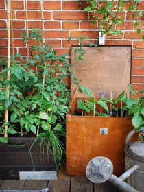 Charming wooden pots - old boxes with tomatos, pebers and squash...