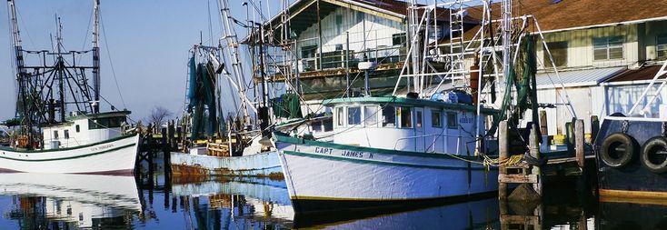 Joe Patti's World Famous Seafood Market. Florida Seafood, Pensacola Seafood, online Seafood Market, shop