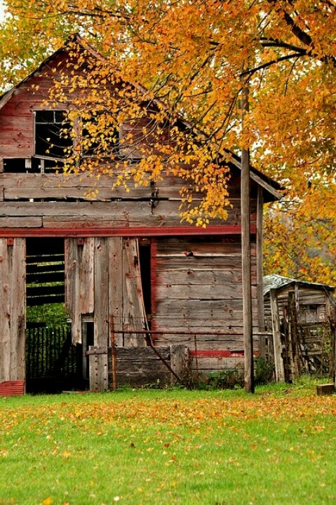 Nothing more wonderful than an old barn embellished by fall foliage, right?