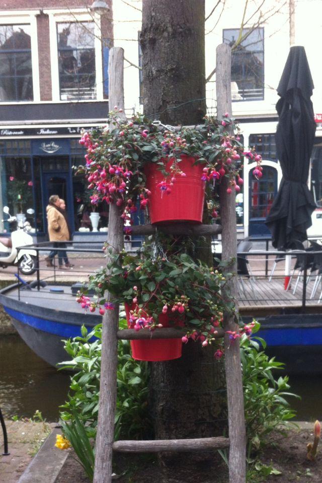 Leuke ladder met planten