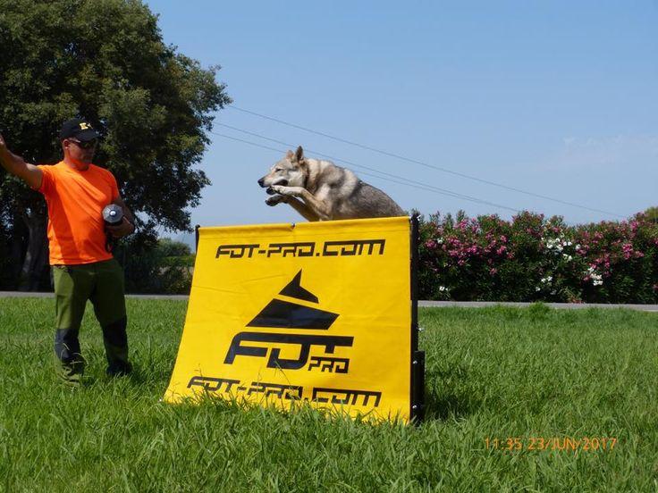 Adiestramiento canino en Unidad Canina de Búsqueda y Rescate. Castellon Saltometro de lona para adiestramiento de perros. Altura: 60 cm, 70 cm, 80 cm, 90 cm, 1 m. REF.: TE300. Precio 112.20 euros. Ir al sitio: https://fordogtrainers.es/index.php/equipos/barrera-ligera-de-medida-reglamentaria-salto-alto-detail