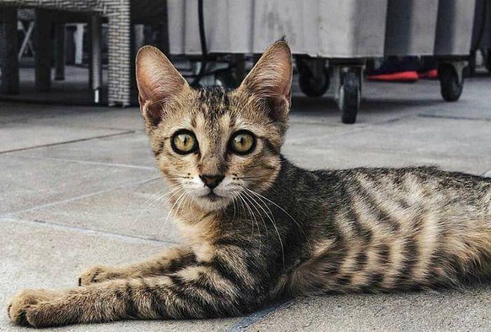 200 Striped Cat Names Cat Names Striped Cat Super Cat