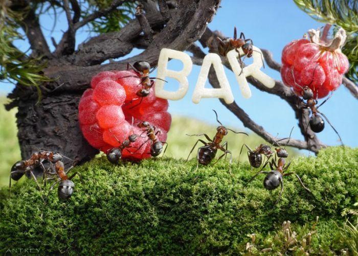 Des yeux pour voir: Dans le monde des fourmis, il n'y a que des fourmis :)