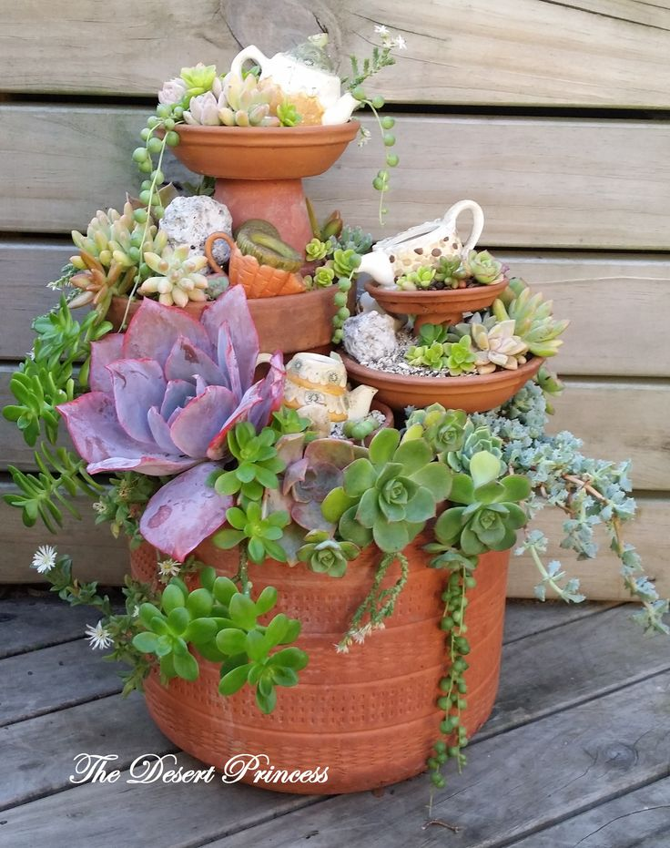 Succulent Mini-Garden Design by The Desert Princess www.facebook.com/thedesertprincess1006