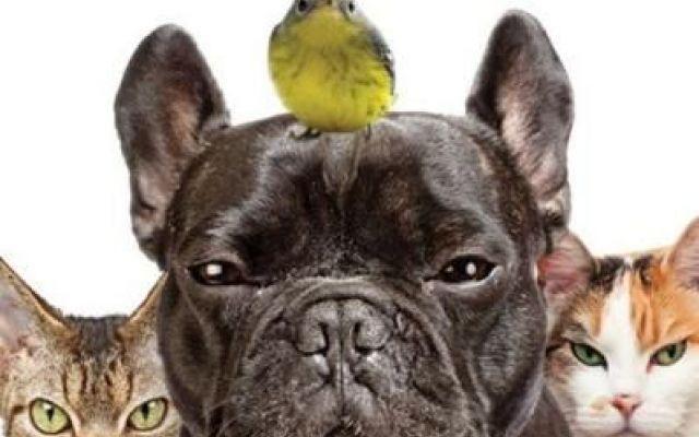 DICIAMO NO AI BOTTI, PROTEGGIAMO I NOSTRI AMICI PELOSI #botti #lav #capodanno #animali #paura