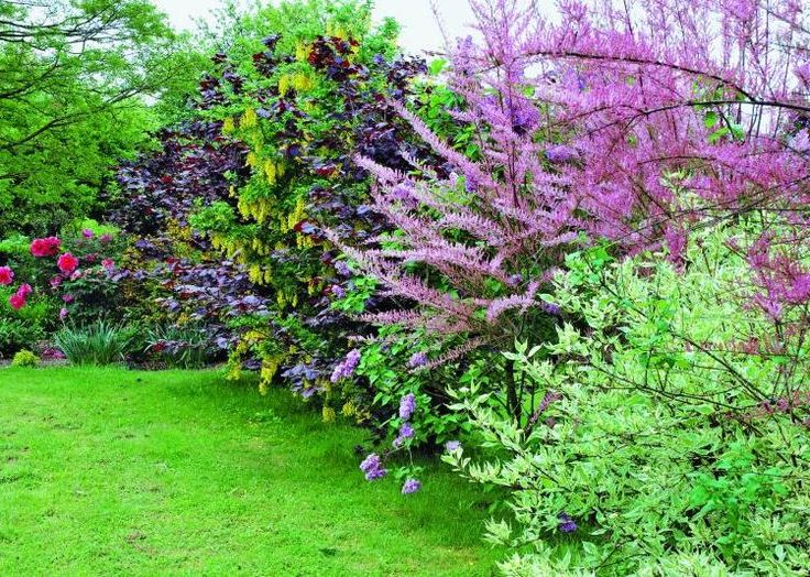 haie de jardin pousse rapide recherche google jardin pinterest haies de jardin haies et. Black Bedroom Furniture Sets. Home Design Ideas