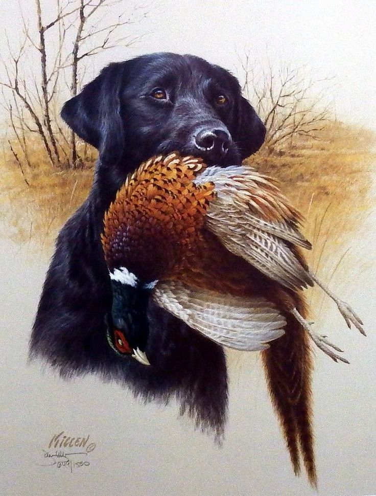"""Another great hunting dog print for sale--IN THE FIELD-BLACK LAB & PHEASANT by James Killen. """"The black lab is truly a favorite companion in the field, the marsh and in our hearts and homes. A proud r"""