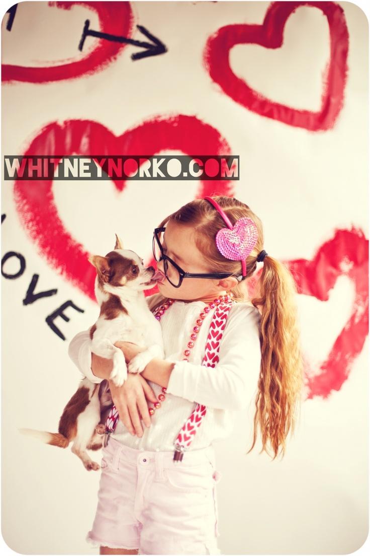 #chihuahua #valentines day #photo shoot #love #neard