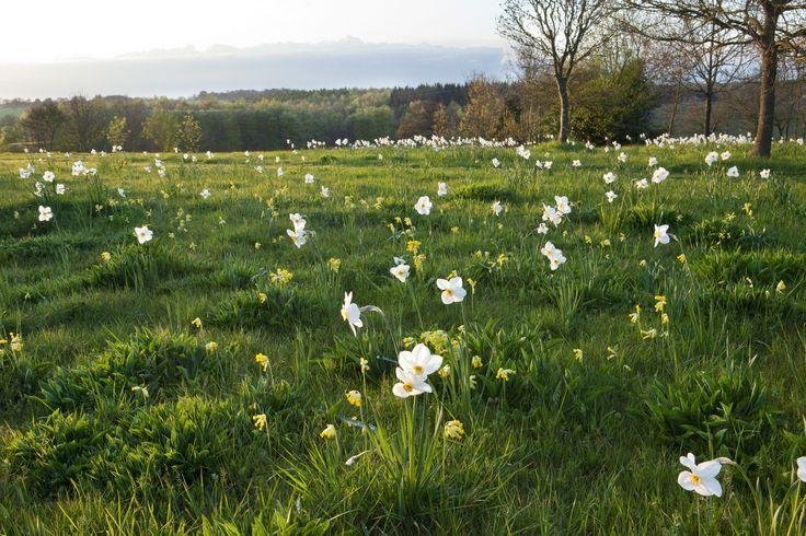 Meadows & praries by Tom Stuart-Smith - click through