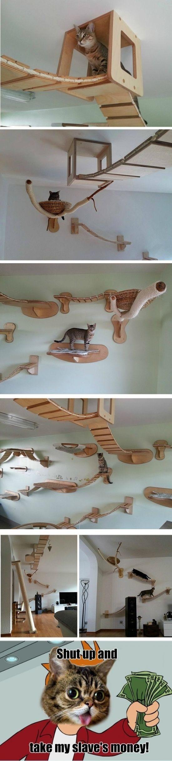 Paraíso de los gatos                                                                                                                                                                                 Más
