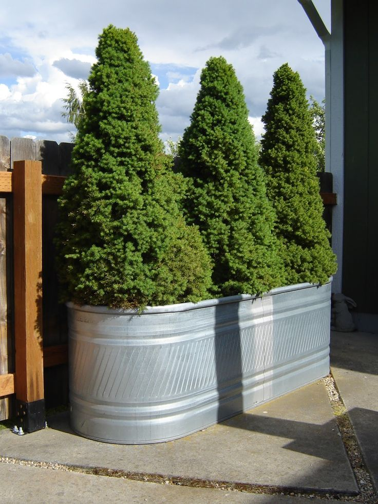 ©2010 Zoll - Spruce Feed Trough Planters