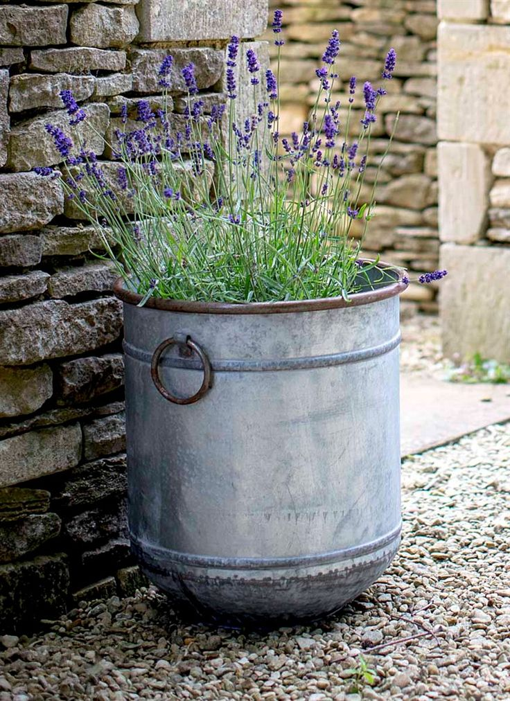 Large Malmesbury Planter. Large galvanised metal tall planter. Lovely with lavender in. Good for a small garden too. affiliate link
