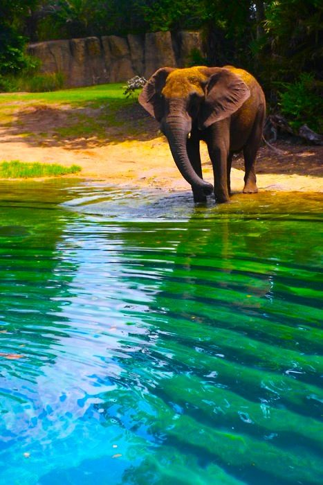 Elephants like to chill.