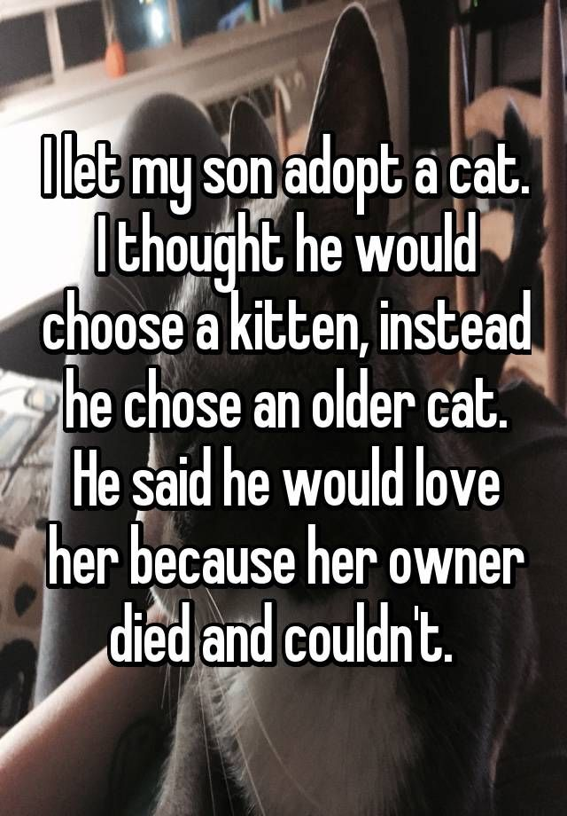 """I let my son adopt a cat. I thought he would choose a kitten, instead he chose an older cat. He said he would love her because her owner died and couldn't. """