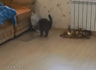 21 Best GIFs of All Time of the Week #12