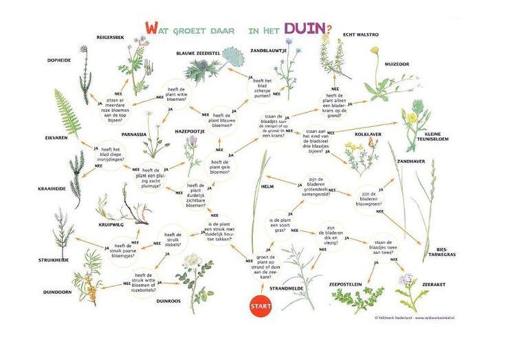 Zoekkaart Duinplanten