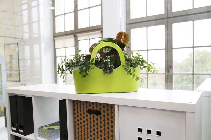 design eko bak Tbasket small by TeraPlast | eko torba Tbasket