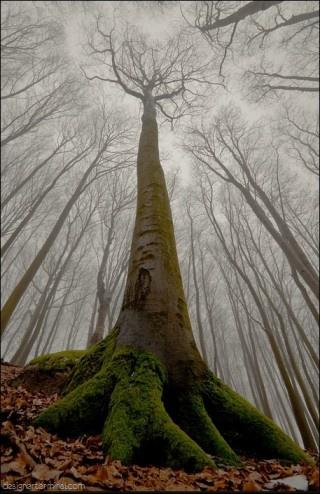 Amazing tree....